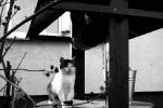 Kot Imbir i jego studnia - Nosek Patrycja